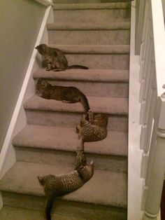 cutefunnybabyanimals: Wife came home from work at 3am to a...