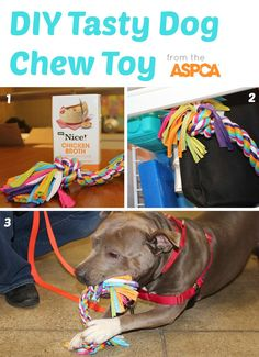 Easy DIY Tasty Chew Toy! Soak a rope toy in chicken broth and then freeze. Once frozen, give the toy to your dog for hours of savory chewing.