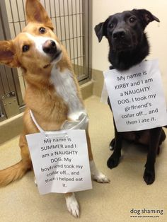 Dog Shaming features the most hilarious, most shameful, and never-before-seen doggie misdeeds. Join us by sharing in the shaming and laughing as Dog Shaming reminds us that unconditional love goes both ways. Cute Funny Dogs, Cute Funny Animals, Cute Baby Animals, Smart Animals, Cat Shaming, Funny Animal Jokes, Animal Memes, Animal Logic, Dog Rules