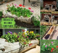 Turn An Old Log Into A Unique Flower Planter