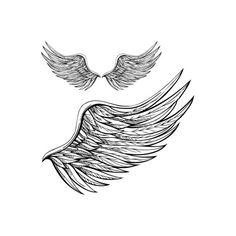 Drawings of Angel Wings - Angel Wing Drawings - Angel Wings found on Polyvore