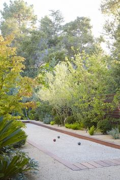 Bocce Ball Court with hellebores, sago palms, boxwood balls, asparagus meyers & olives