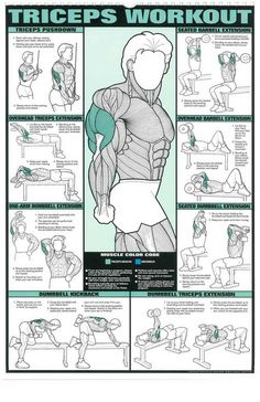 The Absolute Beginner's Guide to Exercise is part of Workout posters - Post with 10757 votes and 240403 views Tagged with The More You Know, ; Shared by The Absolute Beginner's Guide to Exercise Gym Workout Chart, Gym Workout Tips, Dumbbell Workout, Fun Workouts, Tri Workout, Aerobic Exercises, Workout Women, Biceps Workout Chart, Exercises At The Gym