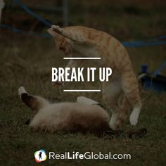 Did your mom used to tell you this? SLANG: Break it up  DEFINITION: Used to ask 2 or more people to stop doing something disruptive (like fighting)  EXAMPLE: Hey stop fighting! Break it up!   Tag a friend so he can learn it too! @