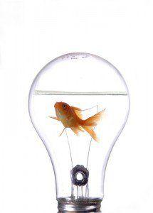 Ideas Rentables De Negocios: Negocios innovadores