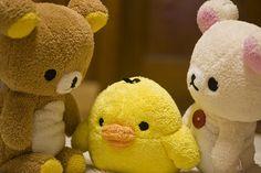 Imagen de http://25.media.tumblr.com/tumblr_lmhiu2a7tB1qcoqbao1_500.jpg.