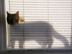 This must be Snickers cousin.... My blinds look exactly the same.....