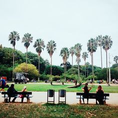 Orlando, Urban Nature, Rio Grande Do Sul, Dolores Park, Instagram Posts, Travel, Porto, Landscaping, Profile