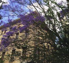 Τα πανέμορφα μωβ δέντρα που στολίζουν έναν από τους ομορφότερους πεζόδρομους στο κέντρο της Αθήνας City, Plants, Colors, Cities, Colour, Plant, Color, Planets, Paint Colors