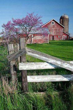 Redbud and barn