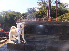 らいちくん/伊豆四季の花公園と城ヶ崎にて/城ヶ崎の吊り橋、渡ってみたよ