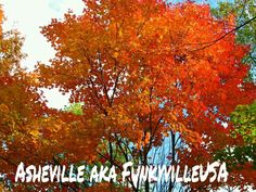 Coming soon to our mountains. . Don't miss it.. it's gonna be a great fall in FunkyvilleUSA