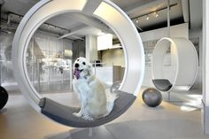 Unleashed Dog Spa / Square One Interiors