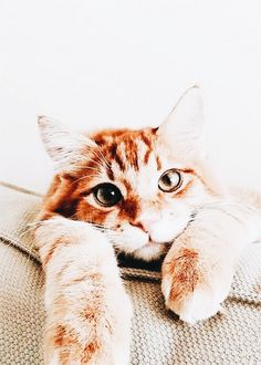 It's common to talk about tabbies as if they represent a cat breed. In fact, the word tabby denotes a coat pattern. Excellent What It Means to Be a Tabby Cat Ideas. Pretty Cats, Beautiful Cats, Animals Beautiful, Animals And Pets, Baby Animals, Cute Animals, Cute Kittens, Cats And Kittens, Tabby Cats