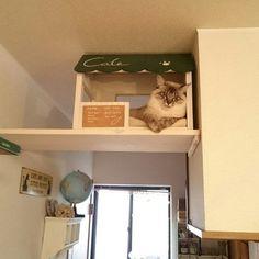 可愛くって仕方ない!ペットと一緒に住む、一緒に暮らすためのインテリアコーデ集 | folk