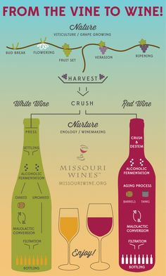 The journey to your glass... explained. | Missouri Wine Infographics- Learn about wine the fun way!