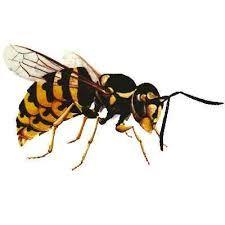 Gestoken door een wesp? Verpulver een paracetamol, doe er een druppel water bij en smeer het papje op de beet. De pijn verminderd, evenals de zwelling.