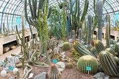 Serre d'Auteuil - serre des cactus et succulentes 9