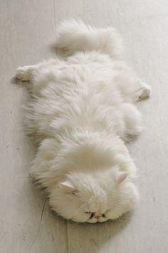 attends, je veux pas le salir, il est vraiment sympa, ton nouveau tapis... ah non ?... c'est ton chat ?... heureusement que j'ai pas marché dessus, finalement...