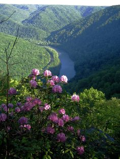 New River Gorge National River as seen from Grandview  Park in West Virginia.  Take me home...Country roads :-)