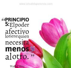 Principio 5
