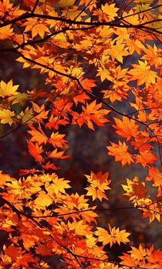 40 Best Wallpaper Images Autumn Scenery Beautiful Nature Fall Pictures