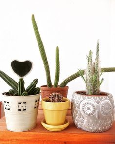 Cacto: como cuidar, tipos e dicas para usar na decoração (60 Fotos) Cactus, Planter Pots, Fez, Buckets, Tall Cactus, Types Of Cactus, Gardening Hacks, Decorative Garden Fencing, Exotic Beauties