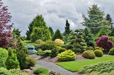 Iseli Nursery display garden - I see Abies nordmanniana 'Golden Spreader' and Chamaecyparis obtusa 'Chirimen'