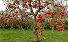 Nestoja nič, no v záhrade ich vyvážite zlatom: Držte sa týchto rád a bohatá úroda vás neminie!