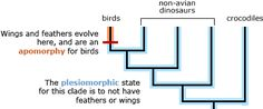 examples of apomorphy and plesiomorphy in cladistics Evolution, Bar Chart, Insight, Science, Education, Science Comics, Educational Illustrations, Learning, Studying