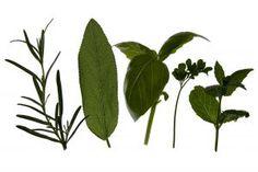 antifungal herbs
