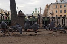 birds in St. Peterburg Russia