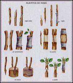 Organic Gardening Tips For Beginners Veg Garden, Vegetable Garden Design, Bonsai Garden, Fruit Garden, Garden Trees, Edible Garden, Garden Plants, Grafting Fruit Trees, Grafting Plants