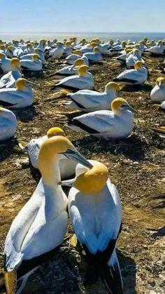 741 Best flying birds images in 2019   Birds, Animals