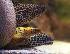 17 best shark reef aquarium images reef aquarium shark sharks