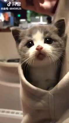 so here iz some kittens (Gallery) It iz Monday. so here iz some kittens (Gallery) It iz Monday. so here iz some kittens (Gallery) Cute Baby Cats, Cute Little Animals, Cute Cats And Kittens, Cute Funny Animals, Kittens Cutest, Cute Dogs, Funny Cats, Sad Cat Meme, Cats In Hats