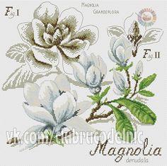 magnolia d-1