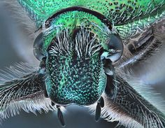 El escarabajo verde!