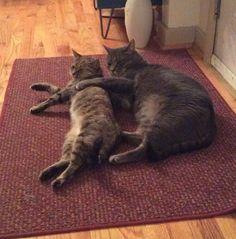 True love Gigi and Mister