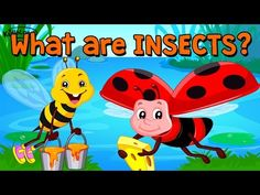 Learn About Insects. Watch this video Insects which help kids remember and recollect the names of particular insect. Stunning Visuals combined with Voice ove...