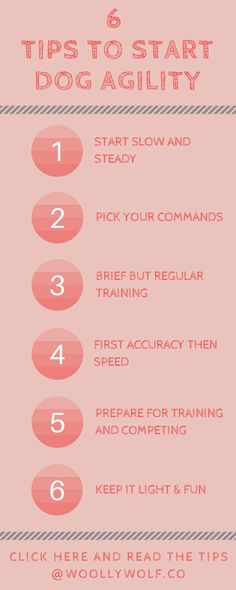 6 Tips to Start Dog Agility Agility Training, Training Your Puppy, Dog Agility, Dog Training Tips, Dyi Dog Treats, Pumpkin Dog Treats, Cat Care Tips, Dog Care, Pet Tips