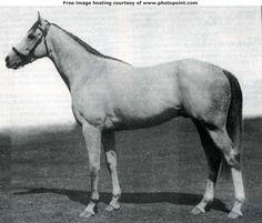 Mahmoud Thoroughbred. Horse genealogy.