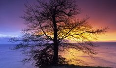amazing colors. i love how the tree splits the two colors