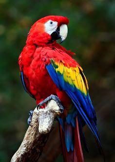 Beautiful Websites for Photographers Parrot Pet, Parrot Bird, Exotic Birds, Colorful Birds, Pretty Birds, Beautiful Birds, Sarasota Jungle Gardens, Animals And Pets, Cute Animals