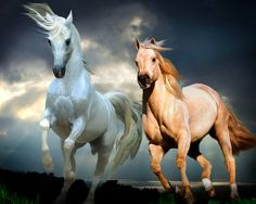 """Exceptional """"horse trailer"""" information is offered on our web pages. Read more and you wont be sorry you did. Horses And Dogs, Wild Horses, Animals And Pets, Beautiful Horse Pictures, Beautiful Horses, Horse Drawings, Animal Drawings, Art Of Dan, Devin Art"""