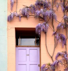 Wisteria House Oxford Iffley Road