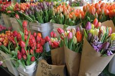 Tulips & Hyacinths!!