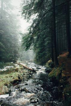Ladyclough Forest   Daniel Casson Photography