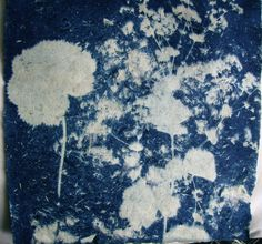 Alchemilla Mollis cyanotype
