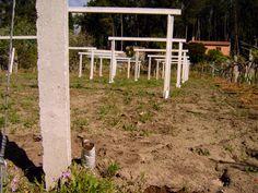 Inicio de obras de emparrado para plantación de albariño.